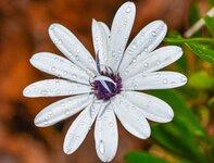 fleurblanche-1FB.jpg