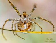 Spider belly.jpg